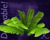 Tropical, Long Leaf