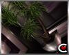 Poison Palm Plant