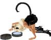 Cat Tail black