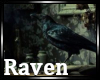 |R| The Raven, Nevemore
