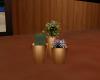 Beach Trio Plant
