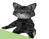 Shoulder Kitty Grey