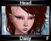 Daisy Head F