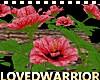 LW_ 12 Roses Garden