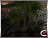 Vista Plant II