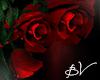 !!! GothicRose Roses l