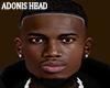 ADONIS HEAD
