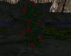 (T)Red Rose Bush