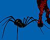 ~R Pet Redback Spider L
