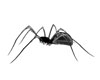 Night Ghost Spider