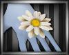 Daisy May - Daisy Ring