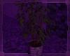 ~DP~ Small Tree REQ