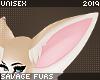 . Fennec | ears
