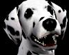 Cruella`s dalmatian