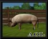 Farmers Pig