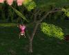 ~TQ~Tree Climbing