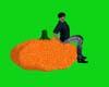 pumpkin + pose   §§