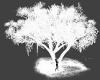 [LP] Cherry white