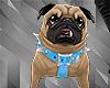 `Dog Pug+Action`
