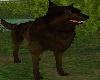 !Spirit Wolf Gold Eyz DB
