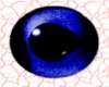Blue Fish Eyes