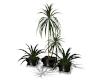 Multi Planter