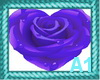 Purple Heart Rose
