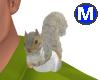 Squirrel mog M