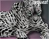 Mel*Leopard pet 2/Req.