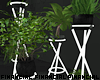 Plants w Neon Holder