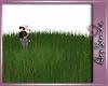 A$.Grass tall