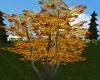 Autumn Tree +lights