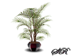 Eclipse Potted Plant