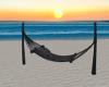 -1m- Beach hammock