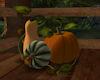 !Autumn Gourds