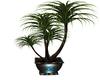 Lapavone Plant 1