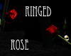 ~MI~  Ringed Red Rose
