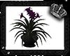 [MLA] Plants purple