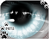[Pets] Frankie | eyes v1