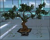 Bonsai Tree Plants