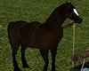 Brown Horse & Trough