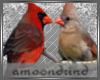 AM:: Winter Birds Enh