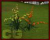 (CG) Park Flowers Exotic