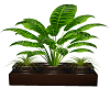 Coffee Plant pot cc