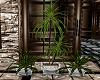 ~D~ Hush Plant Set