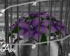 Purple ><Poinsettia
