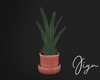 Potted Plant terracotta