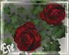 c Red Rose Vines