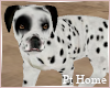 Dalmation Dog Standing