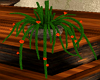 Cactus Plant Potted